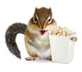 Funny animal chipmunk with blank popcorn bucket isolated on whit Royalty Free Stock Photo