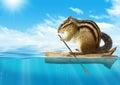 Funny Animal, Chipmunk Floatin...