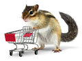 Funny animal with shopping cart on white