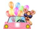 Funny animal sitting in a car