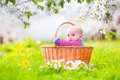 Funny baby in a basket in a blooming apple tree Royalty Free Stock Photo