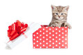 Funny baby cat in red gift box Stock Images