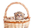 Funny baby cat sitting in basket Stock Photography