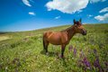 Funny bay horse on the grassland looking at camera Stock Photography