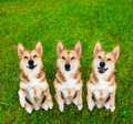 Funny begging dog with different expressions sitting on the grass in pose and looking up Stock Images