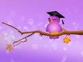 Funny bird graduate Royalty Free Stock Photo