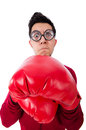 Funny boxer isolated on white Stock Photos