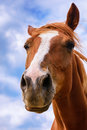 Funny brown horse - portrait. Royalty Free Stock Photo