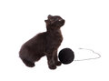 Funny brown kitten and ball of thread isolated on white Royalty Free Stock Photo