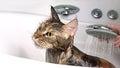 Funny Cat bath Royalty Free Stock Photo