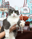 Funny cat holiday birthday party Stock Images
