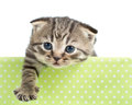 Funny cat or kitten in cardboard box isolated Stock Image