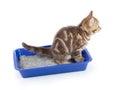 Funny cat pipi in toilet tray box isolated Royalty Free Stock Photo