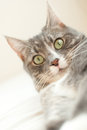 Funny cat portrait Royalty Free Stock Photo