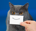 Funny cat portrait with smile on card Stock Photos