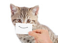 Funny cat portrait with smile on cardboard Royalty Free Stock Photo