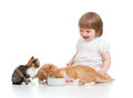 Funny child feeding attractive kitten Stock Image