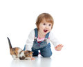 Funny child playing with Scottish kitten Stock Images