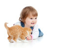 Funny child playing with Scottish kitten Royalty Free Stock Images