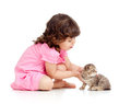 Funny child playing with Scottish kitten Stock Photography