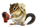 Funny chipmunk cowboy Royalty Free Stock Image