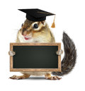 Funny chipmunk graduate hold blank blackboard, isolated on white Royalty Free Stock Photo