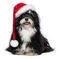Funny Christmas Havanese dog with Santa hat and white beard Royalty Free Stock Photo