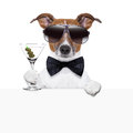 Funny cocktail dog behind white banner Royalty Free Stock Photos