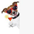 Funny cocktail dog holding martini glass behind banner Royalty Free Stock Photography
