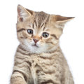Funny confused cat portrait Royalty Free Stock Photo