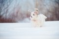 Funny curly super dog playing winter Royalty Free Stock Images
