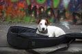Funny Cute Dog In Guitar Case Street Graffiti