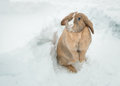 Funny cute rabbit with blue eyes standing in snow Photo libre de droits