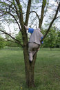 Funny dangerous play eighty year old perky old man climbs up a tree Royalty Free Stock Photography