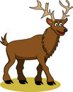 Funny deer cartoon Stock Photography