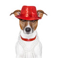 Funny dog Stock Photography