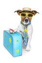 Smiešny pes ako turista