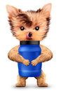 Funny dog holding container with sport nutrition