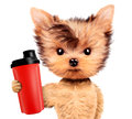 Funny dog holding shaker with sport nutrition