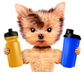 Funny dog holding shaker and water bottle