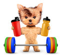 Funny dog holding sport nutrition and barbell