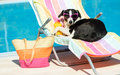 Funny dog sunbathing on summer female vacation wearing sunglasses pet relaxing a hammock at swimming pool Stock Image