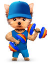 Funny dog training with dumbbell in sport gym