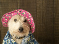 Funny dog wearing a flower hat and Hawaiian shirt Stock Photo