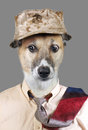 Funny doggy looking wearing hat and tie with crazy eyes Royalty Free Stock Image