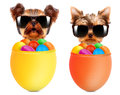 Funny dogs in easter basket with eggs.