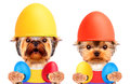 Funny dogs with easter eggs