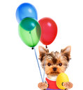 Funny dogs with egg and balloons