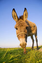 Funny donkey Royalty Free Stock Photos