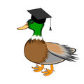 A funny duck in a graduation cap vector art illustration isolated on white background Stock Photos